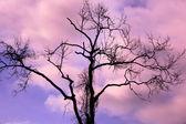 Dry tree on sunset background