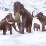 Постер, плакат: Wooly Mammoth Ice Age Scene