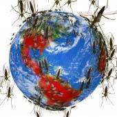 Zika-Virus breitet sich weltweit
