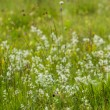 Постер, плакат: Germany Bavaria neglected grassland grasses and wildflowers