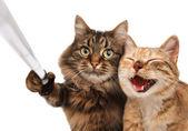 Srandovní kočky - vlastní obrázek