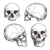 Collection Of Hand Drawn Skulls