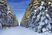 Trail through beautiful winter forest on a clear day