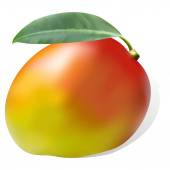 Ripe juicy sweet mango leaf one on striped background