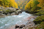 Fast mountain river in the autumn forest