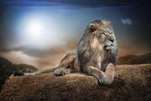 Majestátní Lev na skále