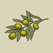 Olive branch engraving style vector illustration Scratch board style imitation