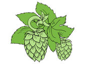 Green color vector illustration of hops with leaves