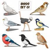 Bird set cartoon colorful vector illustration Educational material