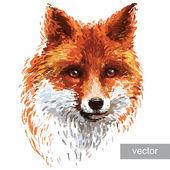 Illustration, farbige Fuchs auf weißem Hintergrund