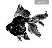 Goldfish illustration artwork  line underwater engraving vector