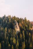 Amazing landscape with rock cliffs in forest at sunset