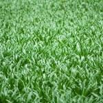 Постер, плакат: Shiny grass blades texture
