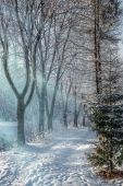 Beautiful winter morning landscape in the city park