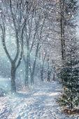 Beautiful winter morning landscape