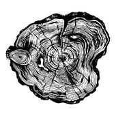 Hand drawn illustration of wood saw cut Highly detailed ink art in engraved style