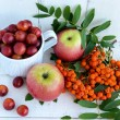 Постер, плакат: Gifts of autumn: apples cherry plum mountain ash on a white background Still life in yellow orange red