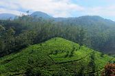 Tea plantation highlands — Stock Photo