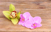 Tropical orchid flowers — Stock Photo