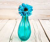 Blue gerbera flower in a vase on wooden background — Stock Photo