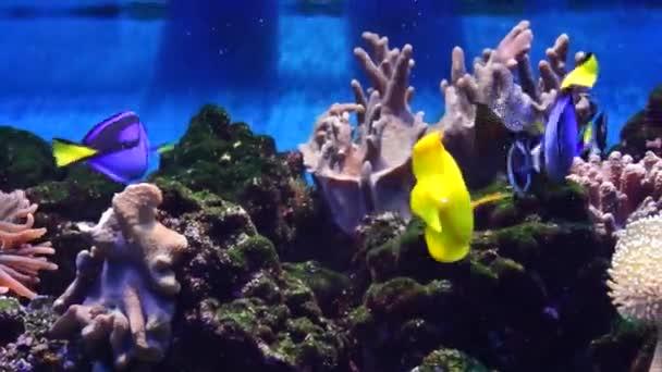 Marine Aquarium, fish