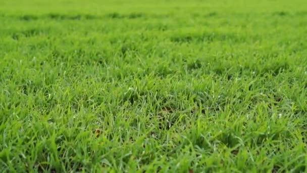 Krátké zelené trávě