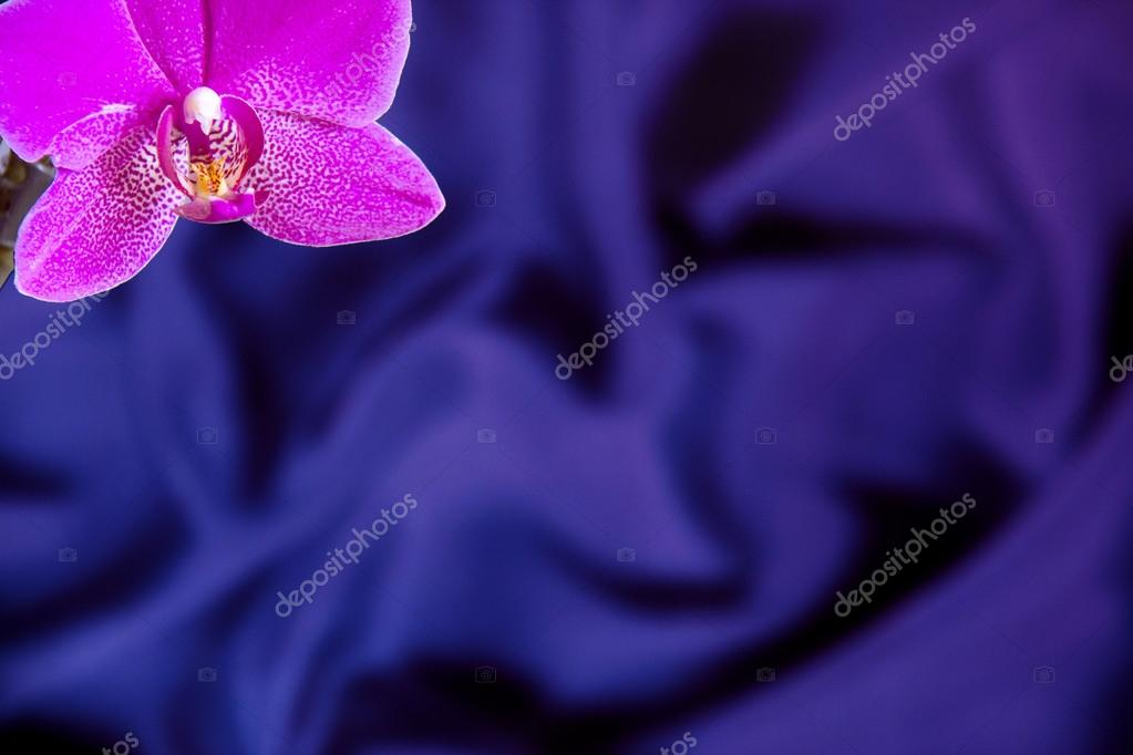 Greeting Card With Orchid Flower On Royal Blue Silk Background Stock Photo