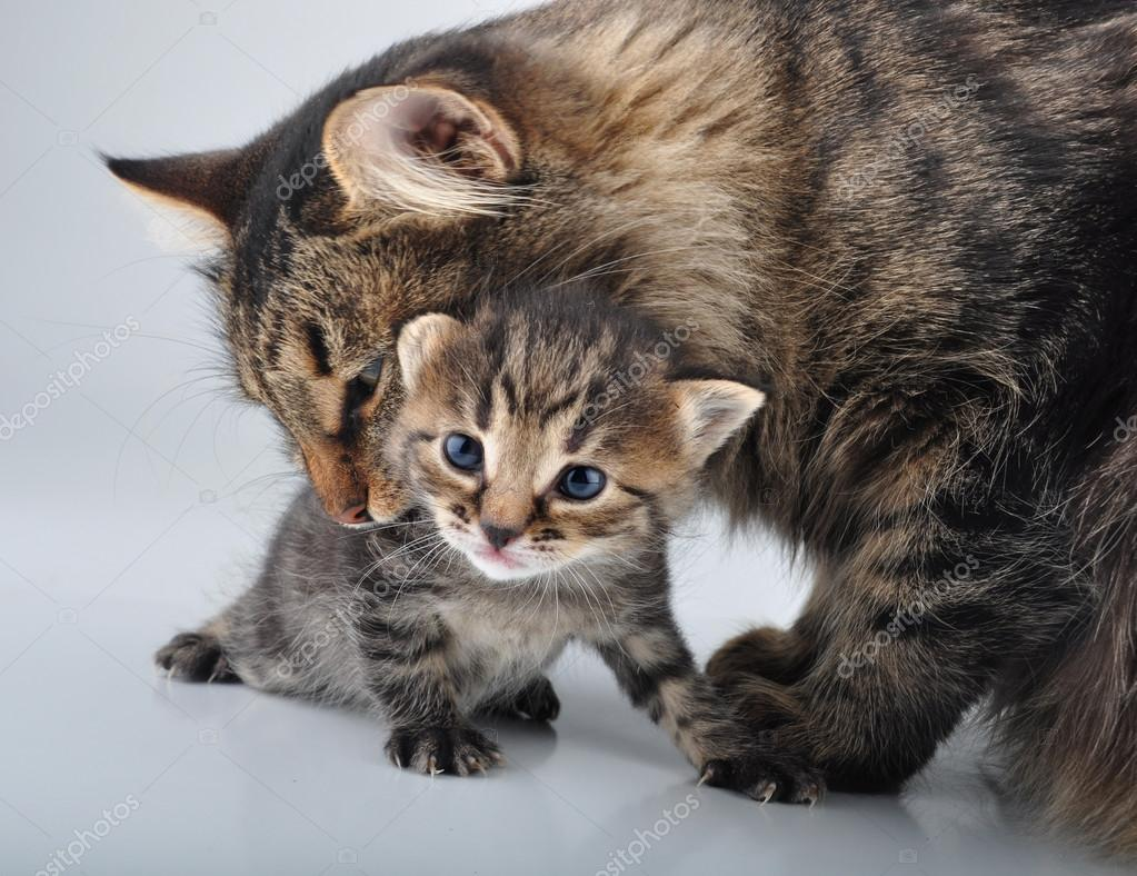 adorable newborn kitten with mother — Stock © Cherry Merry
