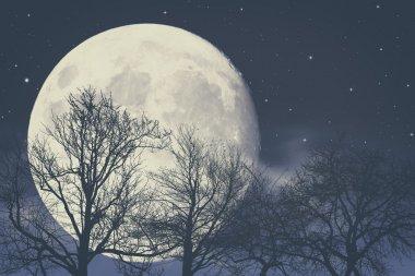 Under Moon light, abstract fantasy