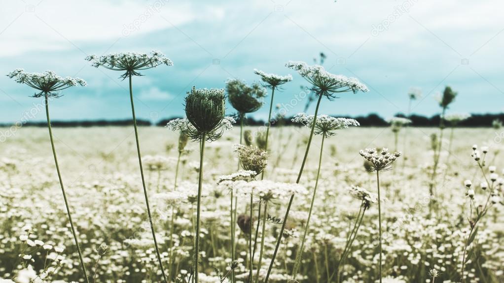 flowers in spring field