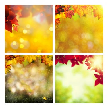 Set of assorted autumnal seasonal backgrounds for your design stock vector