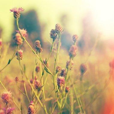 Summer foliage and bright sunlight