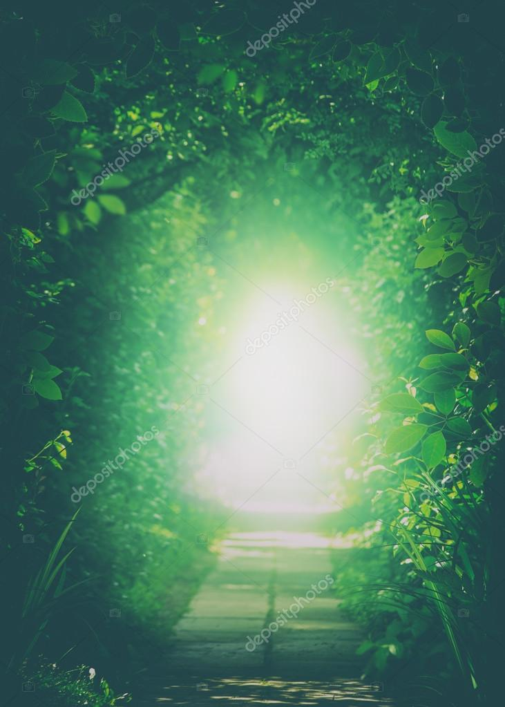 Tunnel In Forest with Light