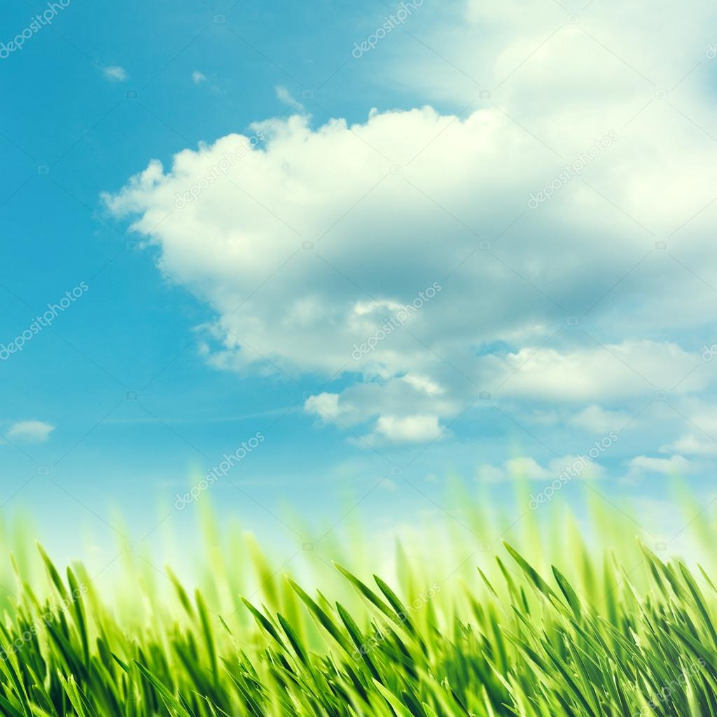 landscape with grass under sky with clouds