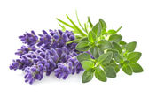 Fotografie Thyme with lavender