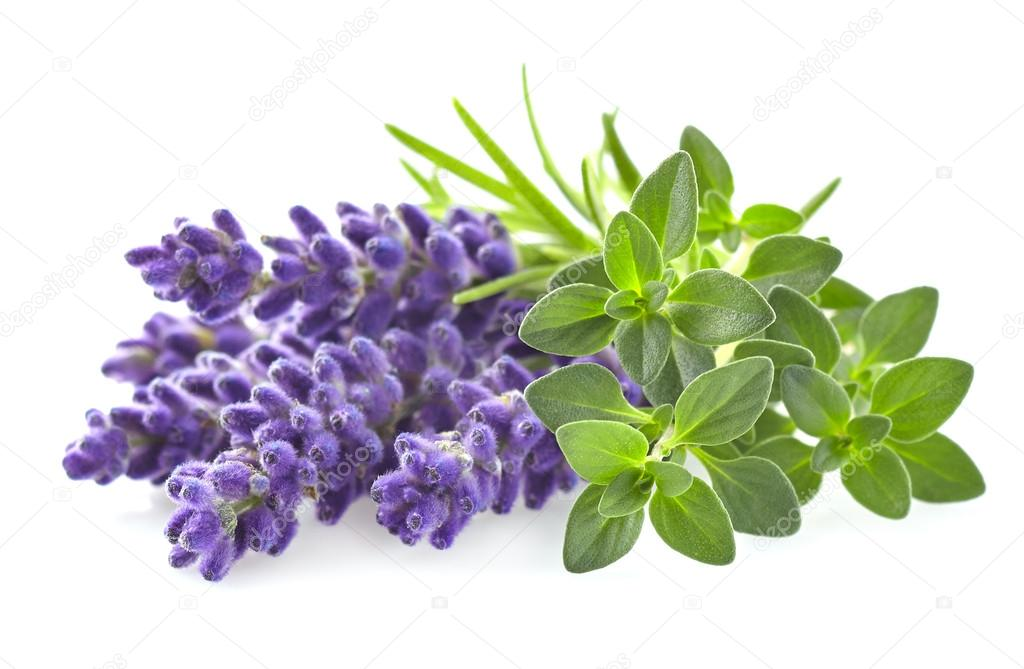 Thyme with lavender