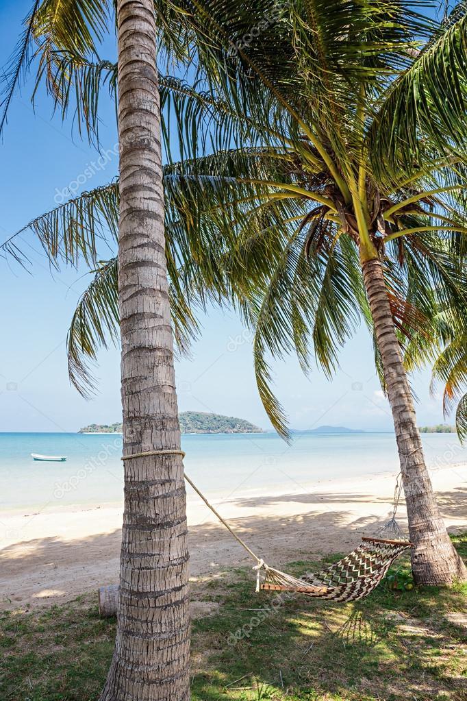 Hammock in shade of palm trees