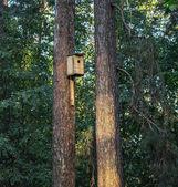 A pine-Tree birdhouse