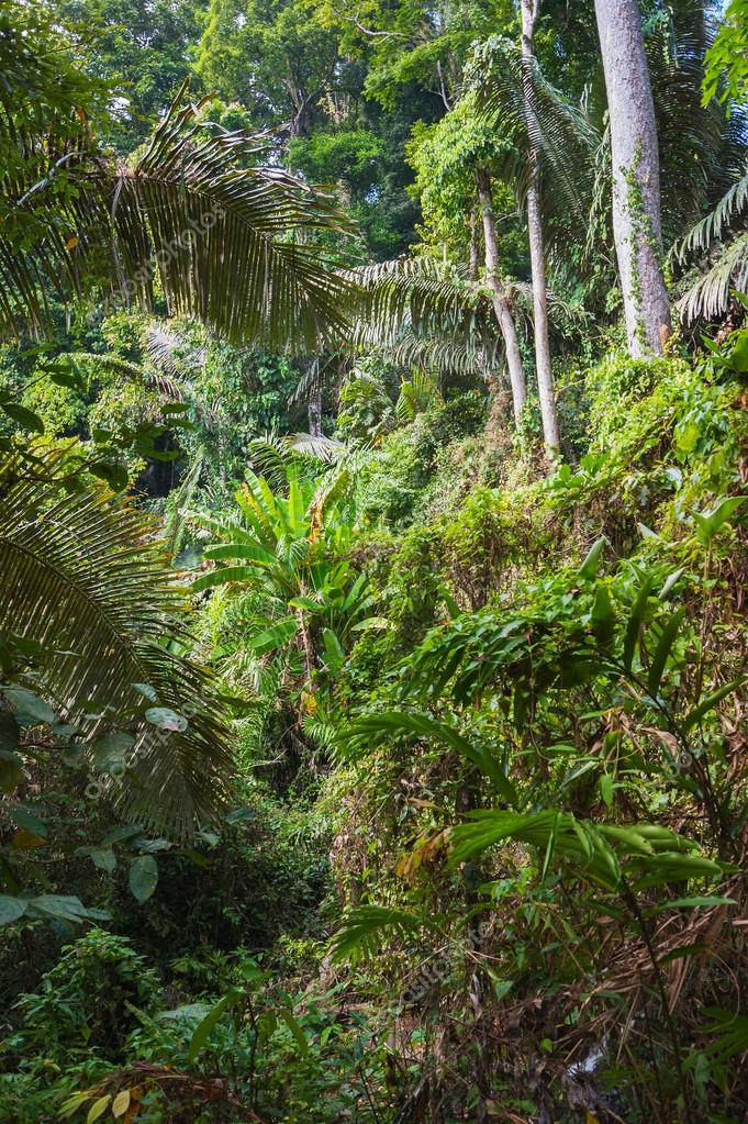tropical jungles