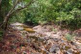 Stream v tropické džungle