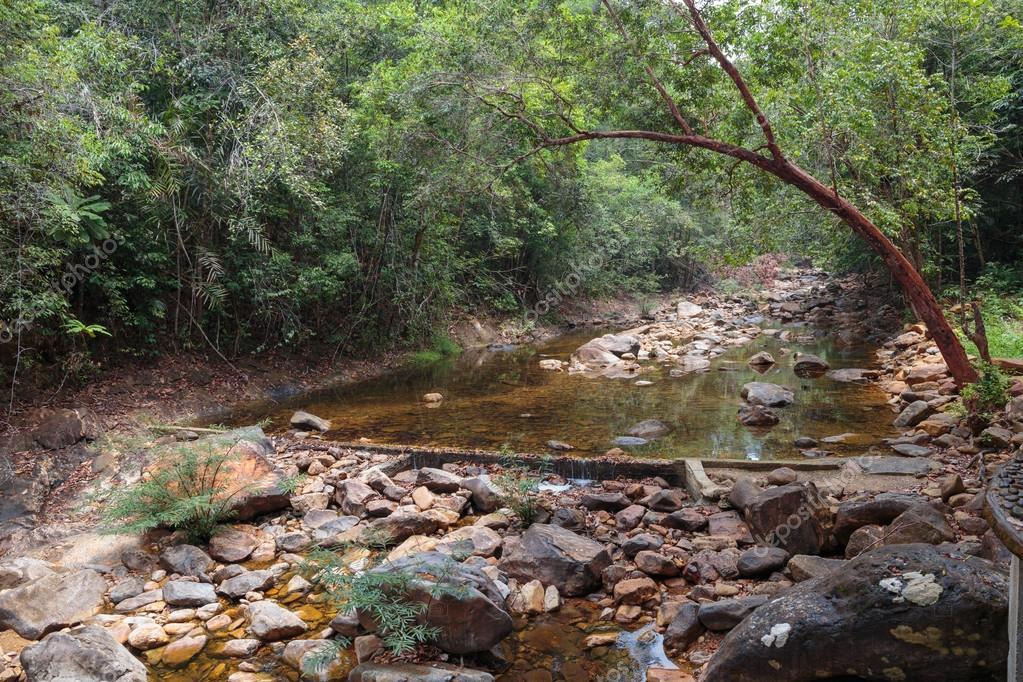 Stream in the tropical jungles
