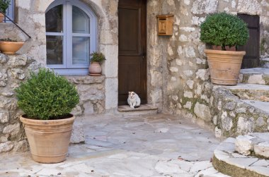 Small patio with cat and flowers