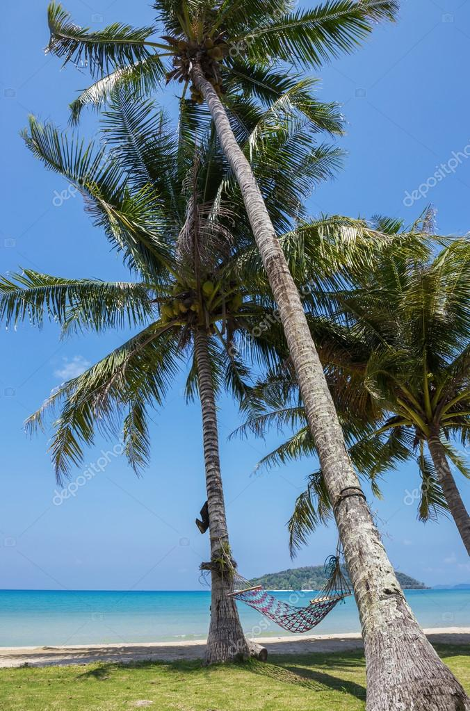 Hammock in  shade of palm trees