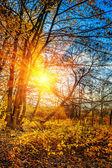 Bezlisté podzimní Les