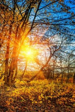 Sunset in leafless autumn forest instagram stile stock vector