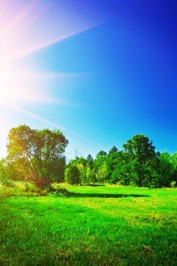View on summer landscape