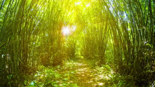 Golden Tunnel amongst Bamboo Stands in Thailand