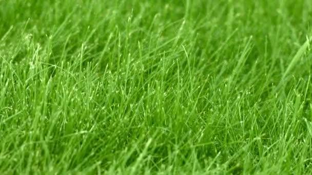 The grass on the lawn closeup