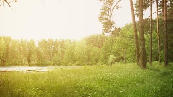 Shore lesní jezírko s sluneční paprsky