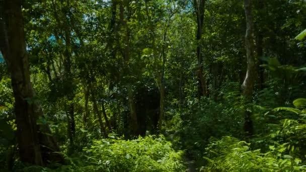 Upward Tilting Shot of Jungle Foliage and Trees